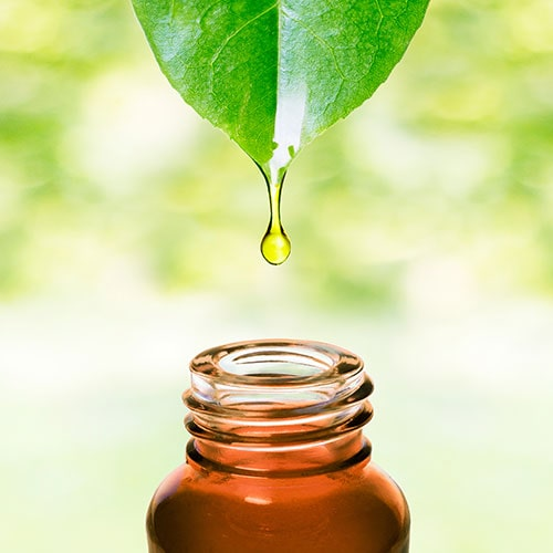 Leaf dripping natural medicine into a bottle